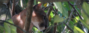 Corcovado National Park, Caño Island Tours, Drake Bay, Costa Rica