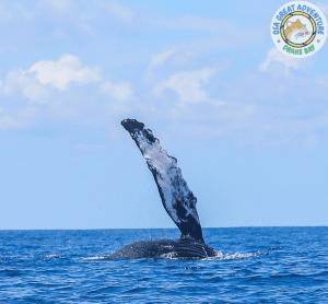 Delfin- und Walbeobachtungstour
