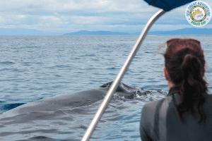 Tour de avistamiento de ballenas y delfines