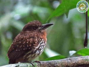 Tour de avistamiento de aves en Bahía Drake, Costa Rica